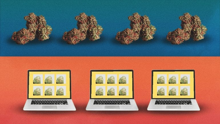 Marijuana buds and a laptop