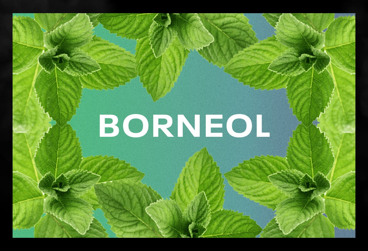 BORNEOL BEST TERPENES ONLINE FOR WEED