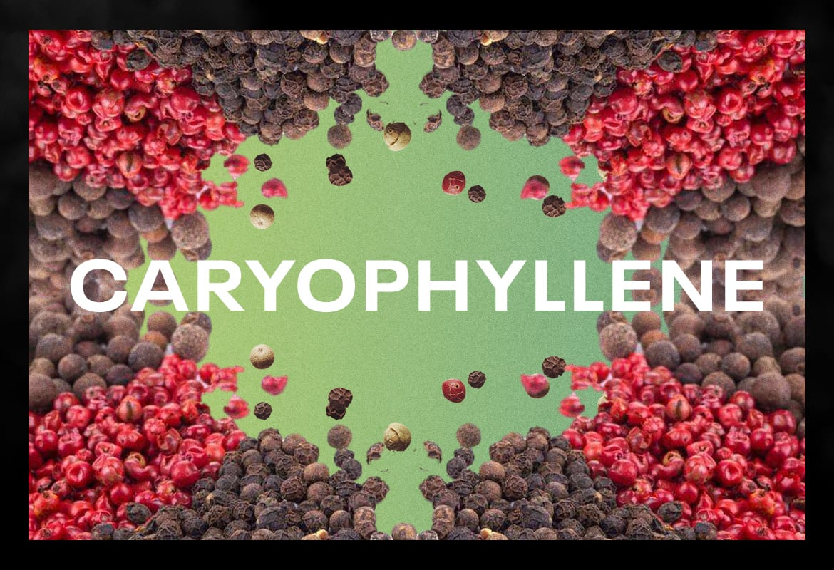 CARYOPHYLLENE BEST TERPENES ONLINE FOR WEED