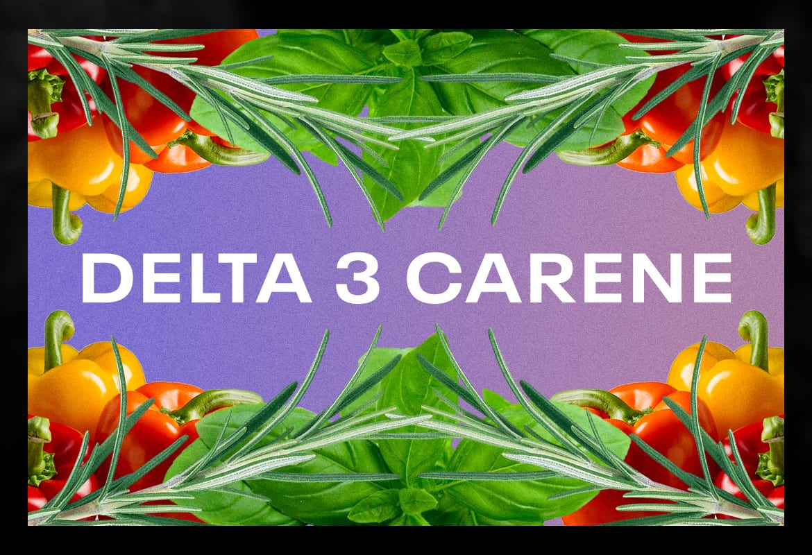 Delta 3 carene BEST TERPENES ONLINE FOR WEED