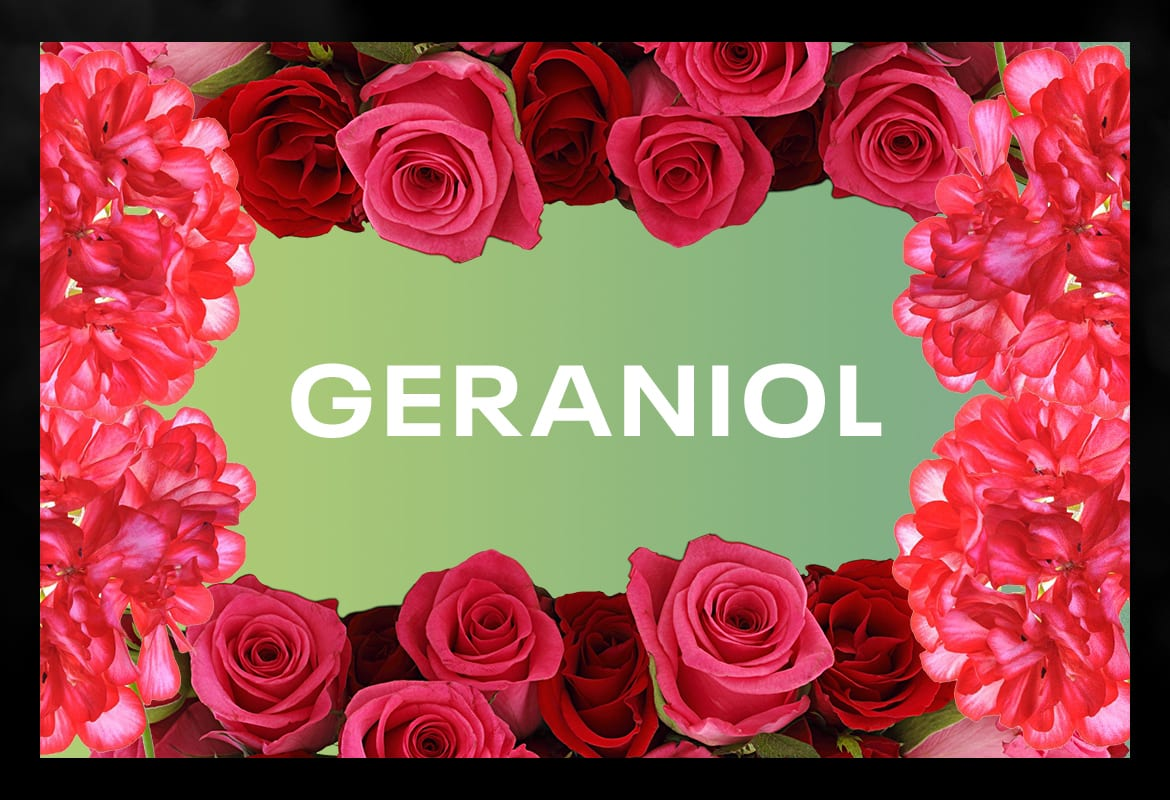GERANIOL BEST TERPENES ONLINE FOR WEED