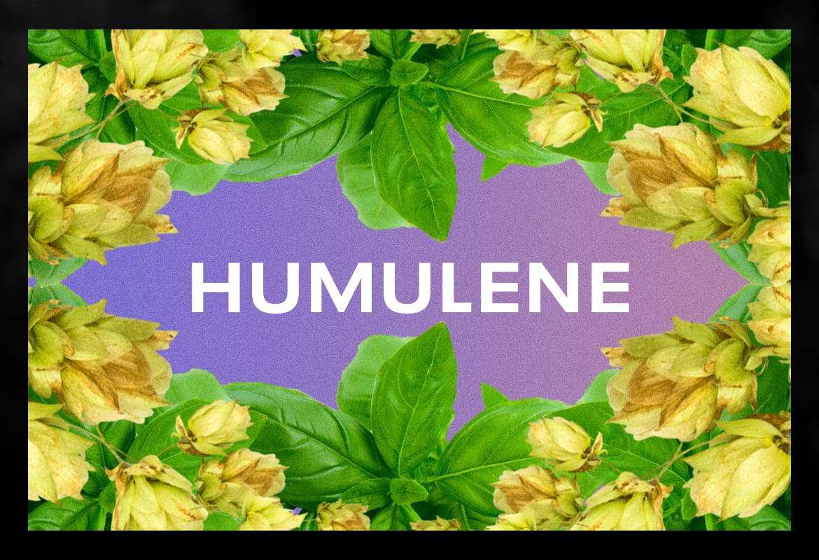humulene BEST TERPENES ONLINE FOR WEED
