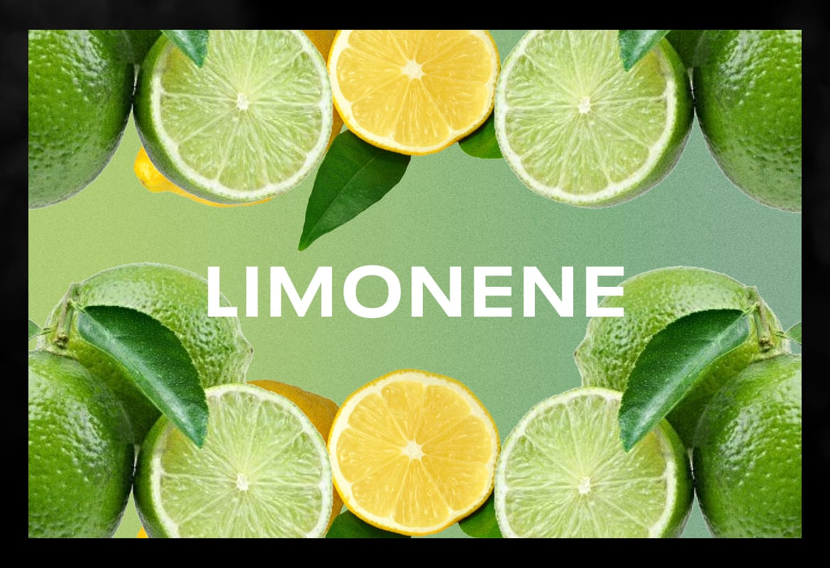 limonene BEST TERPENES ONLINE FOR WEED