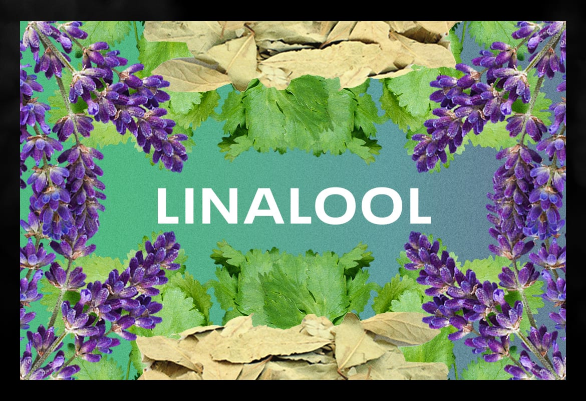linalool BEST TERPENES ONLINE FOR WEED