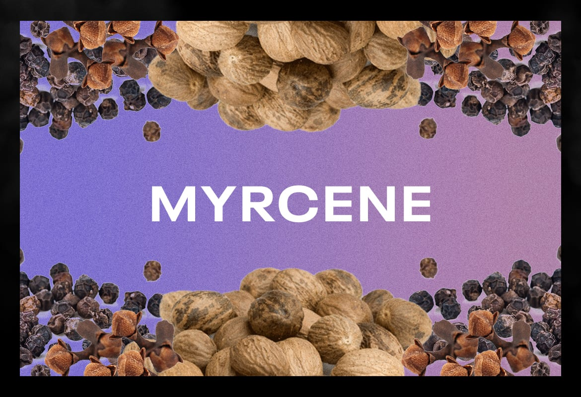 myrcene BEST TERPENES ONLINE FOR WEED