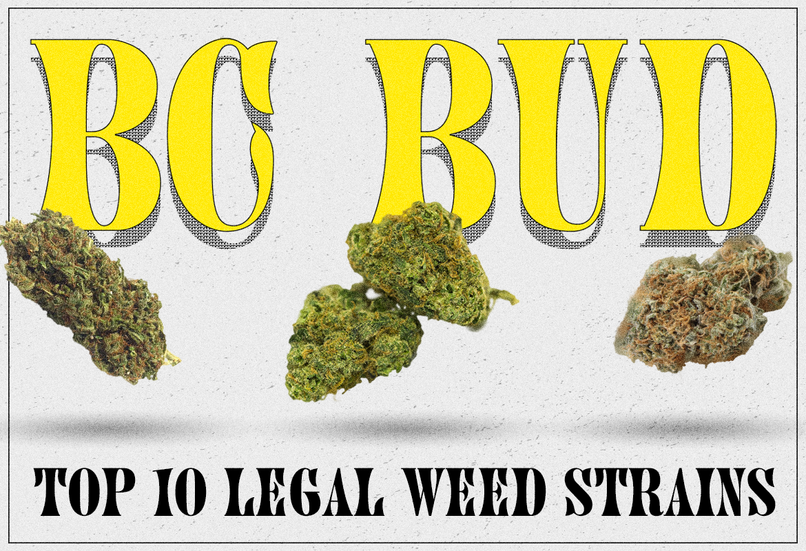 BC Bud Top 10 legal weed Strains